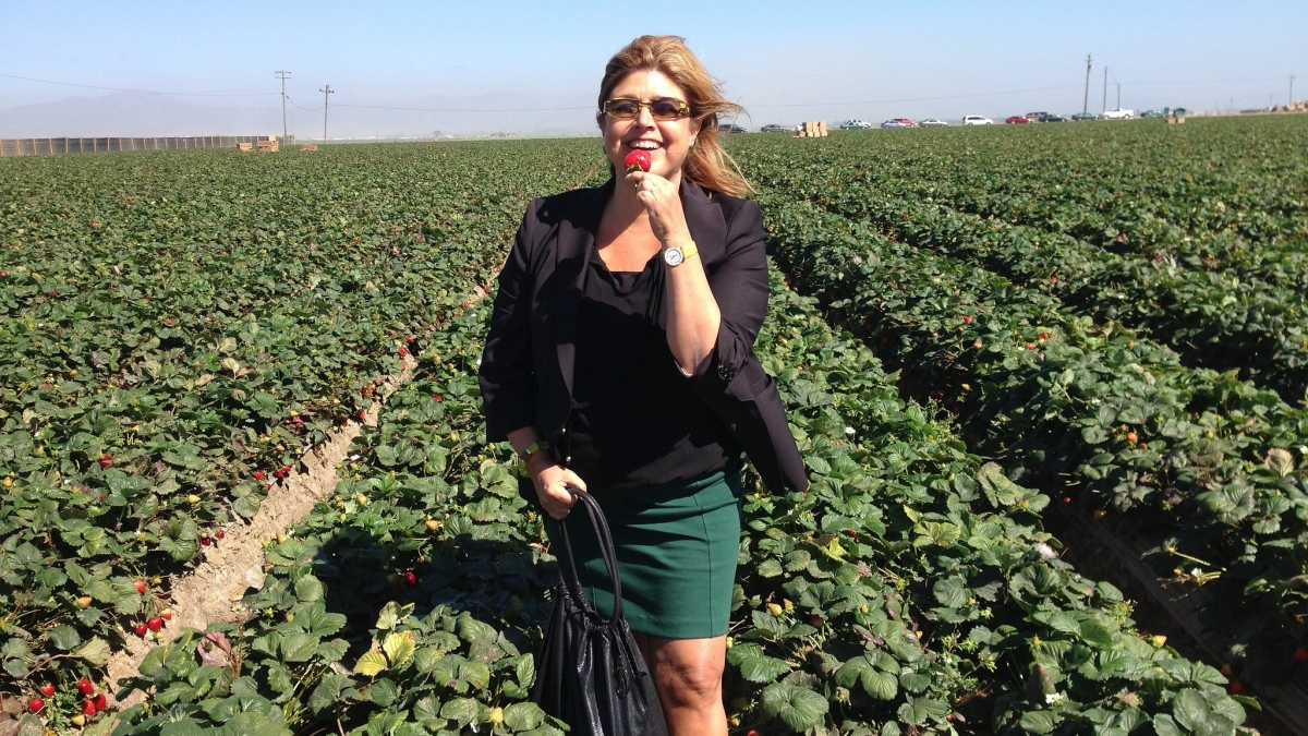 Tourists Badly Overdresses for Strawberry Picking