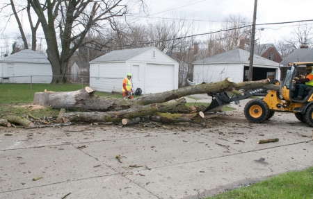Portage la Prairie Must Chop Down Trees To Keep Its Name