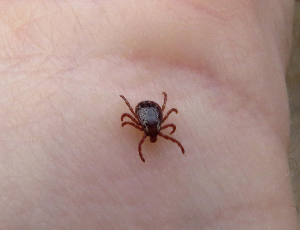 Canadian Wood Tick Catching Championships are set to go this weekend in Lavenham, Manitoba and Spruce Woods Provincial Park